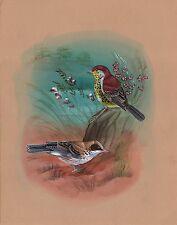 Sparrow Bird Art Handmade Indian Miniature Ethnic Nature Watercolor Painting