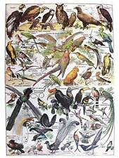 SCIENTIFIC BIRDS IDENTIFICATION OWL VULTURE TUCAN ART PRINT POSTER BB9406