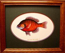 Sunfish/Bluegill/Ducks Unlimited Edition/Pan Fish/Ice Fishing/Freshwater art