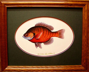Sunfish Bluegill Ducks Unlimited Edition Pan Fish Ice Fishing Freshwater art SEE