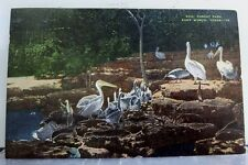 Texas TX Fort Worth Forest Park Zoo Postcard Old Vintage Card View Standard Post