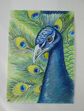 Hand drawn animal pictures, Original Contemporary PEACOCK