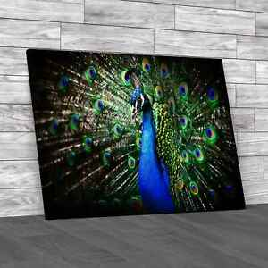 Lovely Peacock Design Canvas Print Large Picture Wall Art