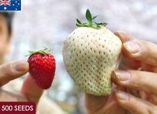 Japanese White Strawberry Seed Large Sweet Heirloom Rare Wild Exotic 500 Seeds