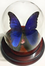 Morpho didius Butterfly Dome