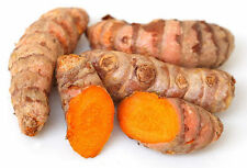 BUY 1 LOT GET 1 FREE,TURMERIC,HERB,GINGER,SPICE,CURCUMA LONGA,SPICE,FRUIT TREE,