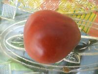 Schwarze Birne Russisch Tomate Tomaten Samen neue Ernte 2020  bio Anbau Nr.524