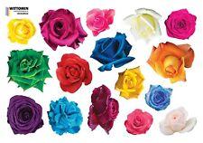Aufkleber Sticker Wandsticker Wandaufkleber Fenster Rose Bunt Möbel Türen Diele