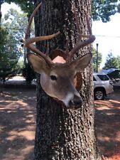 Non-Typical White Tail Deer Mount/Antlers.Magnificent