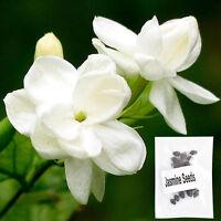 20 Pcs Pure White Jasmine Plant Seeds Perennial Flowers Seeds Home Garden Decor