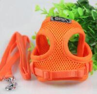 Hundegeschirr Geschirr Hundeleine Set Air Mesh Leine Chihuahua Yorkie M Orange