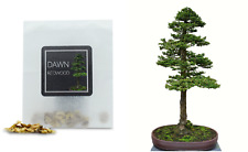 30 Dawn Redwood Bonsai Seeds | Grow Your Own Bonsai Tree | Bonsai Beginners Gift