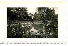 Scenic Park View-Trees-Water-1938-Miami-Florida-RPPC-Real Photo Vintage Postcard