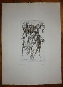 Marc Dautry gravure originale signée Le bouc emissaire fantastique 1958