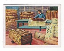 """25/195 GOMMA sammelbild """"BUNA"""" - magazzinaggio e imballaggio di gomma SACCHI impresso"""