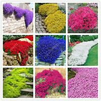 100 pcs/bag Creeping Thyme Seed or Multi-color ROCK CRESS Seeds - Perennial flow
