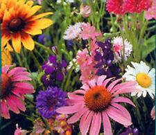 BUTTERFLY FLOWER SEED MIX - BULK - 27,000 SEEDS *****