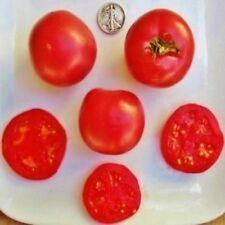 Eva Purple Ball - Heat Resistant Heirloom Tomato - Awesome Slicer - 40 Seeds