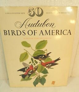 Audubon Birds of America by Roger Tory Peterson 50 Color Large Poster Size Book