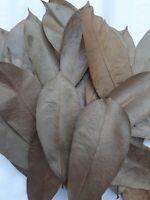 Dried Soursop 100 Leaves Graviola Guanabana Organic Sour Sop Sri Lankan Annona