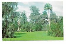 Vintage Florida Chrome Postcard Lettuce Lake Corkscrew Swamp Sanctuary Immokalee