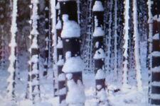 20 GIGANTE semi Bambù Pubescens, Moso, inverno fino a -20 gradi c#362