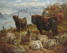 Jones Charles Highland Cattle And Sheep Grazing Print 11 x 14  #  #3211
