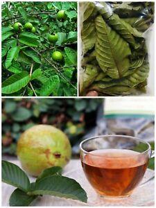 Organic Homemade Dried Guava Leaves Fresh Green Anti diabetic Ceylon (50) Leaves