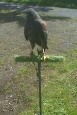 Falconry Training Perch