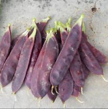 5 pcs purple red Snow pea (Pisum sativum) Vegetable Seeds