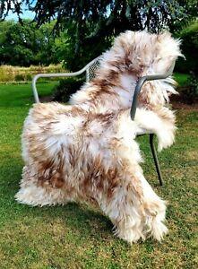 XXXL Cream and Brown Wolftip Sheepskin Rug - 140cm by 80cm A+++ (4213)