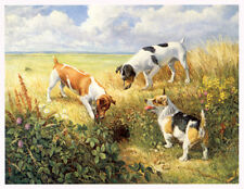 JACK RUSSELL WORKING HUNT TERRIER DOG ART LIMITED EDITION PRINT JRT Missed Again