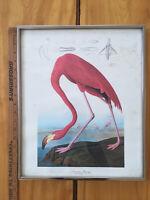 FRAMED!Vintage Original AUDUBON AMERICAN FLAMINGO Print Bird Plate Picture 14x17