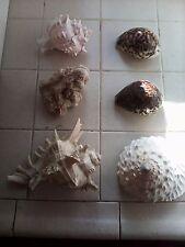 SEASHELLS,STARFISH,ROCKS,GLASS BEADS, QUILL FISH