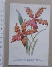 carte ORCHIDEE Cattleya Dowiana Elongata - publicité pharmacie Darrasse