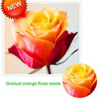 Arrivalgradual Change Yellow Seeds Plants Pink Rose Bonsai Potted Flower Rare