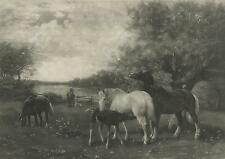 ANTIQUE HORSES EQUESTRIAN WILLOW TREES COLT MARE STALLION PASTORAL OLD ART PRINT