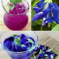 30g 100% Thai Dried Butterfly Pea Tea Flower Pure Organic Natural Blue Drink