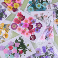 Pressed flower mixed organic natural dried flowers diy art floral decors gift NT