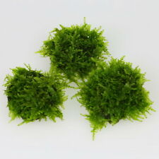 2x TAIWAN Moss STONE PAD - Live aquarium fish tank plants low light tropical