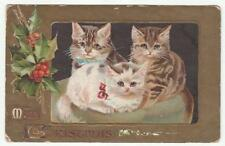 Cat Not Available Single Collectable Animal Postcards