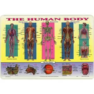 Painless Learning Placemat: Human Body