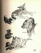 Scottish Terrier & German Shepherd Vintage Dog Print 1950 Diana Thorne Scottie