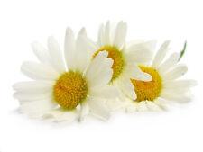 Nutriente, Emolliente & Naturale Camomilla Crema 50ml
