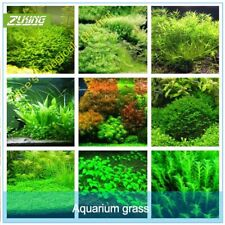 1000Pcs Seeds Aquarium Grass Plants Water Beautiful Green Carpet Rare Kinds Home