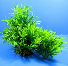 Aquarium Plastic Plants  33cm Ornament  Decor for Aquatic Fish Tank