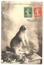 CPA Faune de Montagne Savoie Marmotte