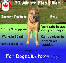 12 Instant Flea Killer Capsules, Nitenpyram. The same ingredient as Capstar Cats