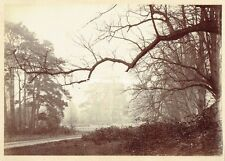 Brooding, atmospheric 1880s Woodland Albumen Photograph