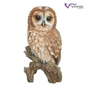 WeatherResistant Indoor/Outdoor Detailed Real Life Tawny Owl Ornament Vivid Arts